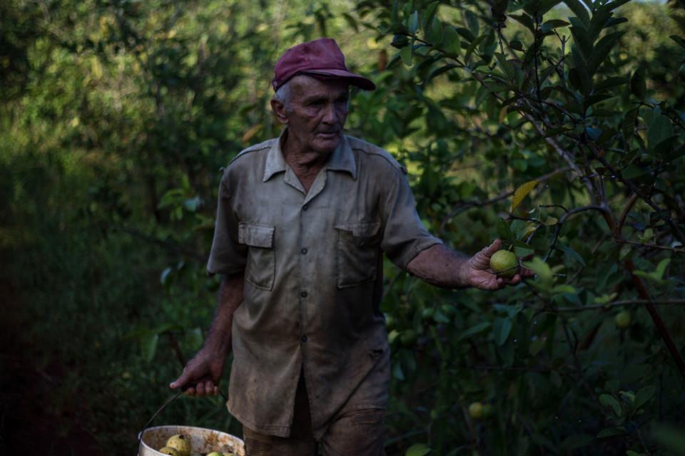 fernando_fruit_picker